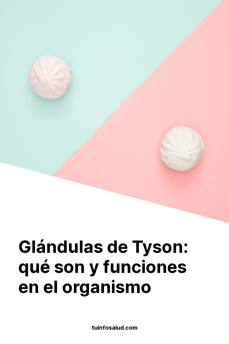 Glándulas de Tyson: qué son y funciones en el organismo